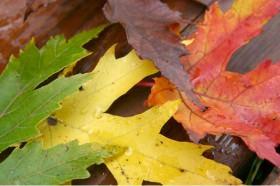 Tend�ncias de cores para o outono