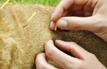 Acupuntura Veterin�ria traz sa�de aos animais