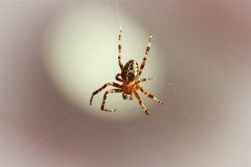 O que significa sonhar com aranha?