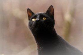O que significa sonhar com gato?