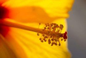 Hemorroidas sinalizam dificuldade de se desprender do passado
