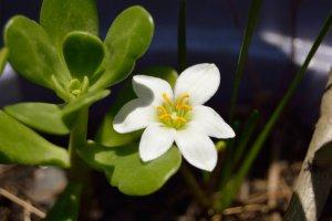Efeitos terapêuticos de algumas flores