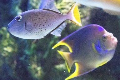 Signo do mês: Peixes