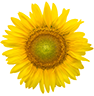 Cor de 2019: Amarelo